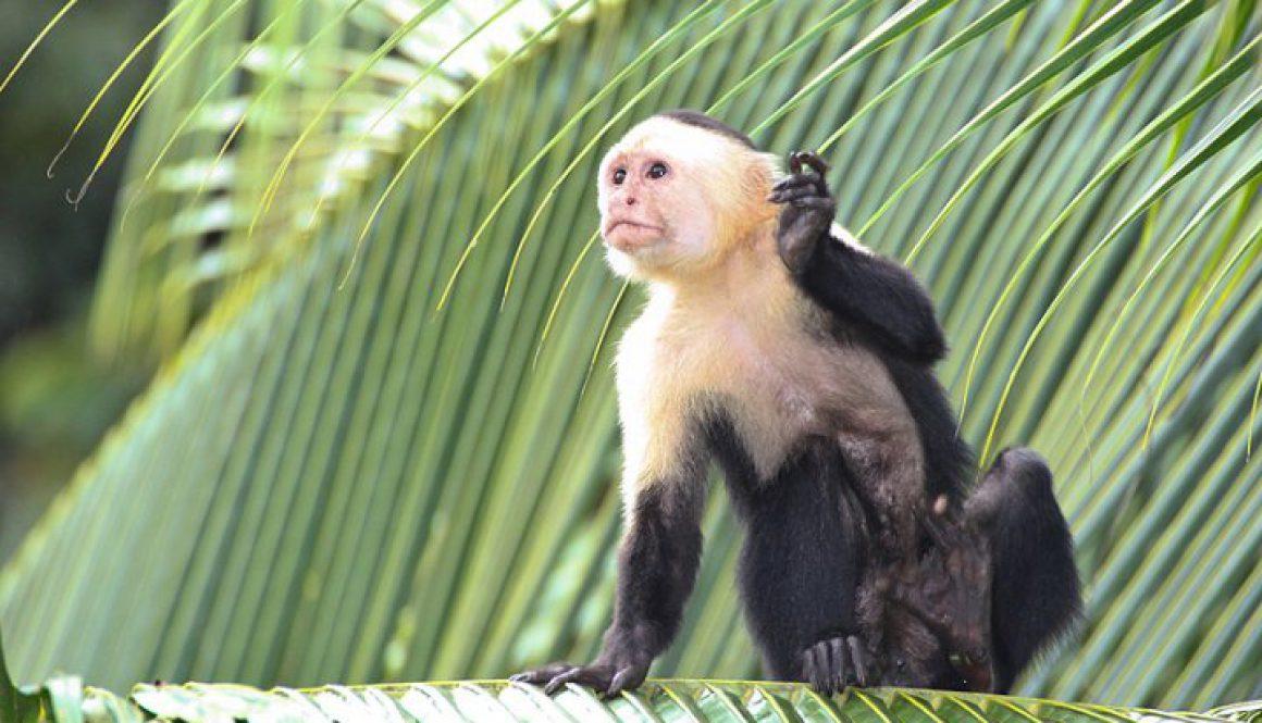 コスタリカ 熱帯雨林