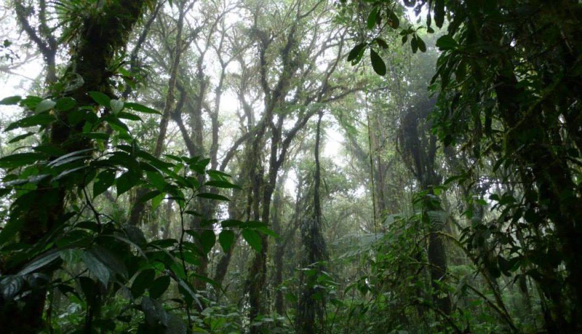 コスタリカ 熱帯雲霧林