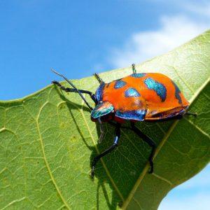 昆虫探検ツアー