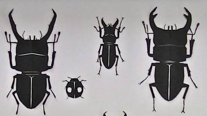 本日開催!ワークショップ・昆虫の切り絵制作